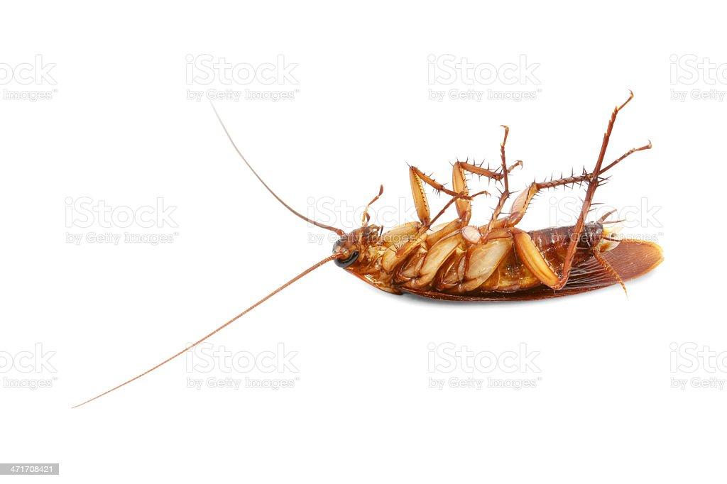 Dead cockroach royalty-free stock photo