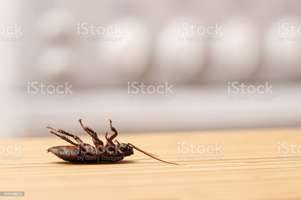 Dead cockroaches in an apartment kitchen stock photo