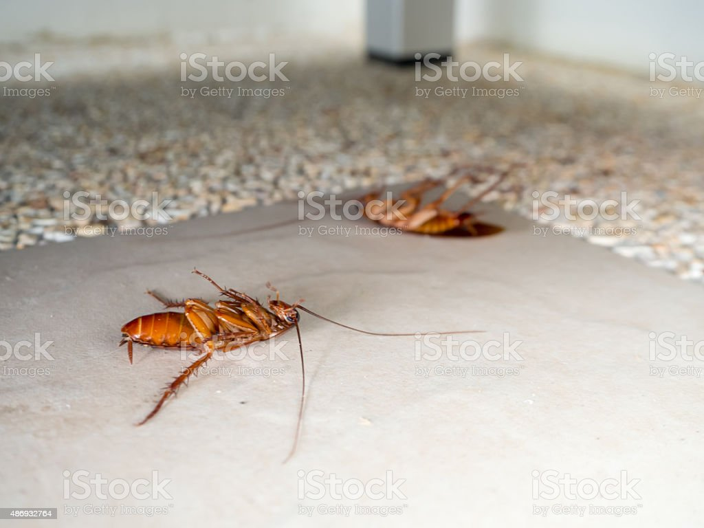 Dead cockroaches on the floor stock photo