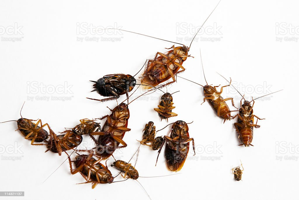 Dead cockroaches stock photo