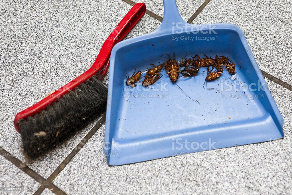 Dead cockroaches royalty-free stock photo