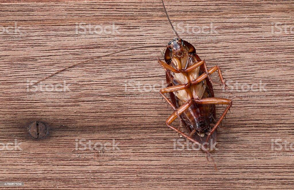 Dead cockroaches stock photo