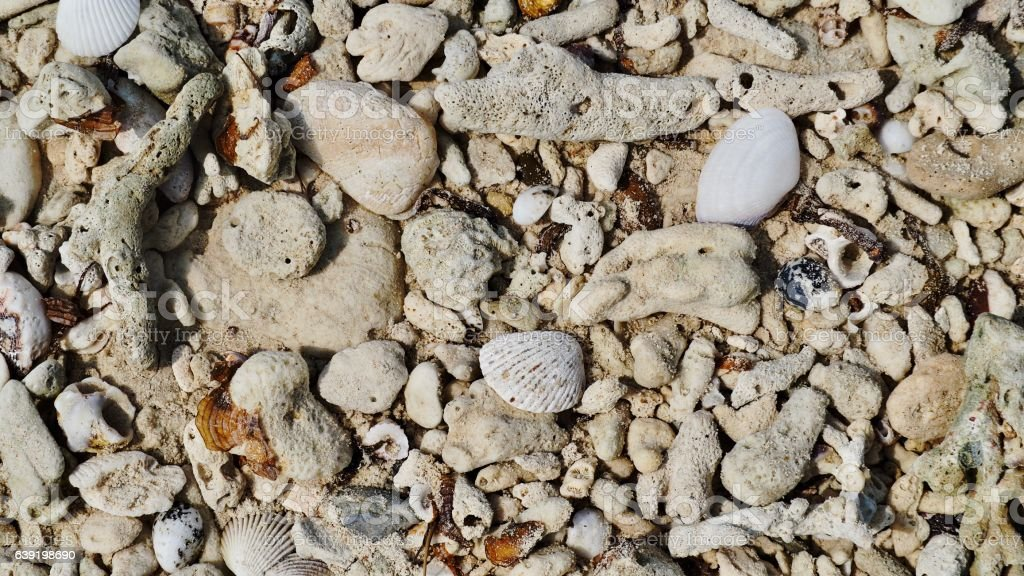 Dead coral and shells stock photo