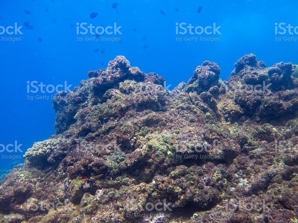 Dead Coral (phylum Cnidaria) Bleaching Global Warming Climate Change stock photo