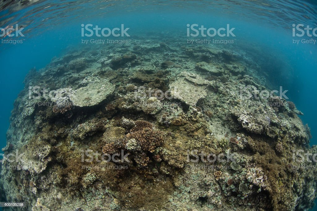 Dead Corals in Fiji stock photo