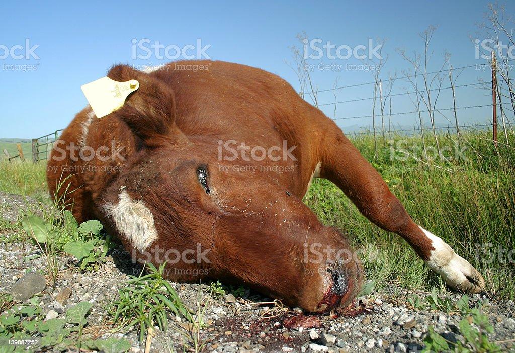 Dead Cow stock photo