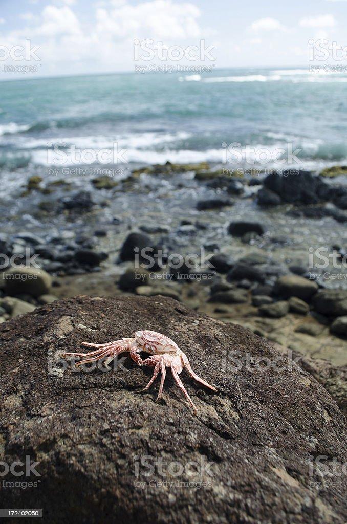 dead crab on rock near sea royalty-free stock photo