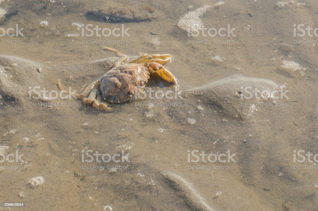 dead crab on the beach stock photo