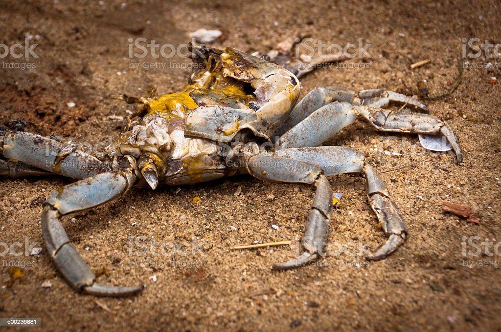 Dead Crab stock photo