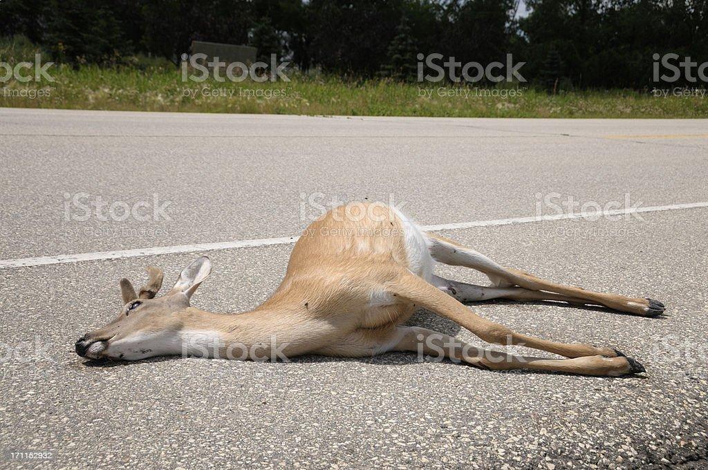 Dead deer by side of road stock photo
