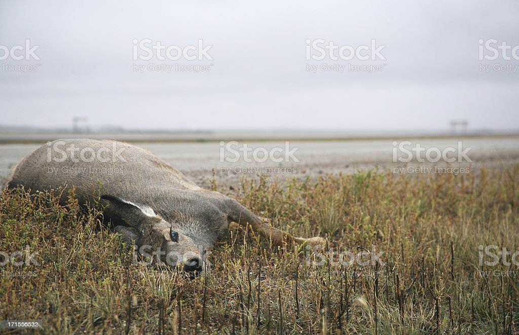 dead deer stock photo