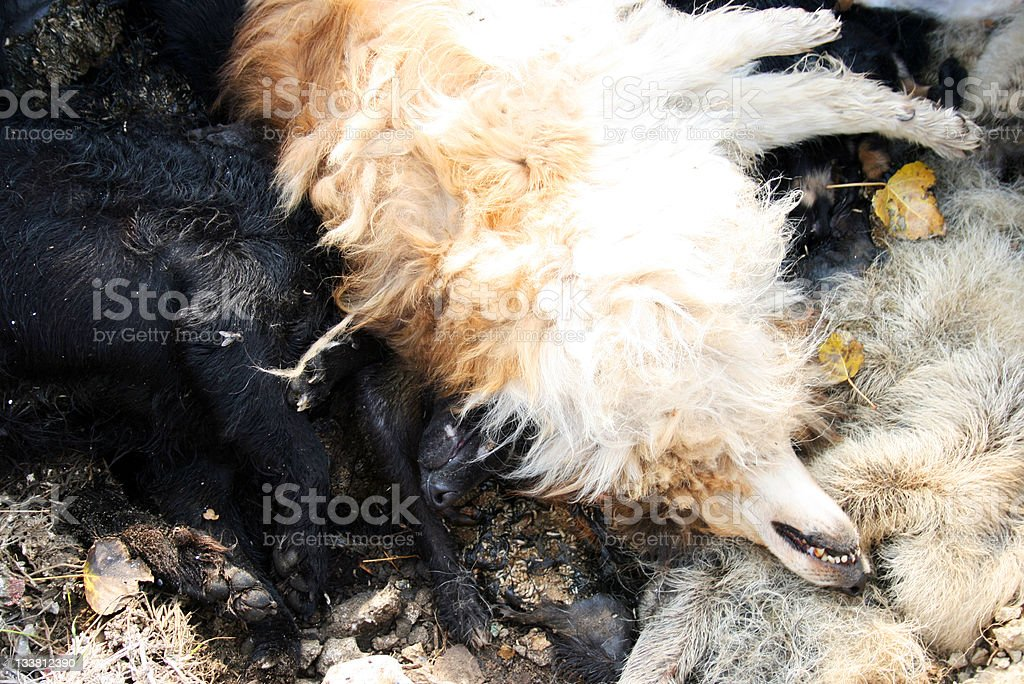 dead dogs royalty-free stock photo