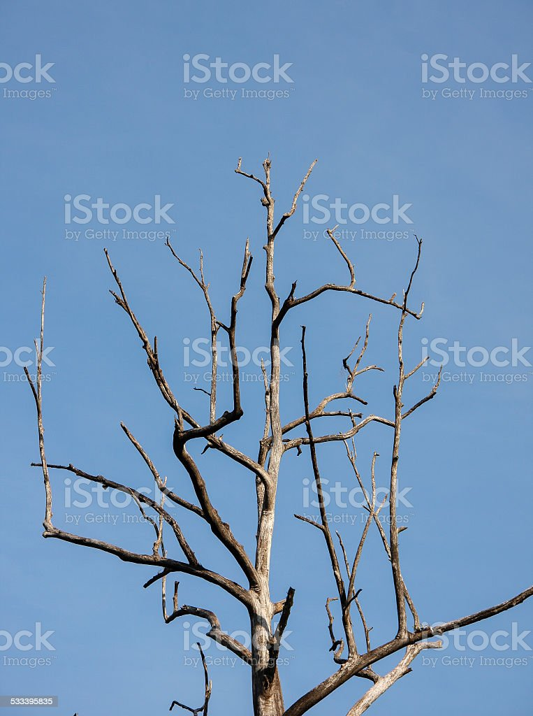 Dead dry tree with blue sky royalty-free stock photo