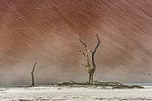 Dead dry trees of DeadVlei valley at Namib desert