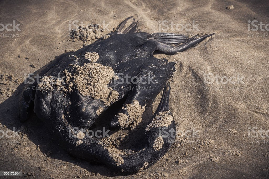 dead duck on beach stock photo