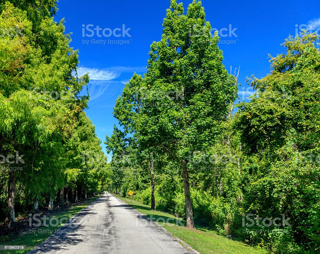 Dead End Path stock photo