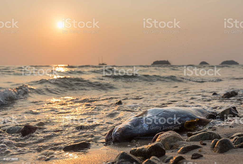 dead fish against sunset at the coast of Koh Chang stock photo