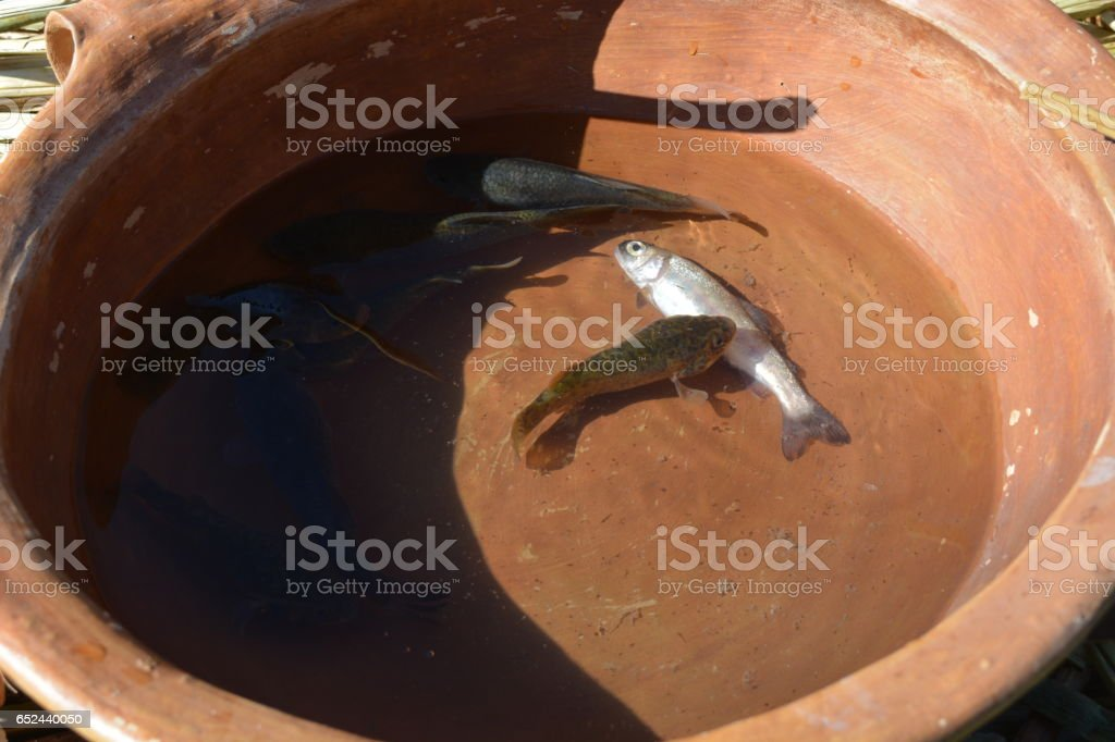 Dead fish in a bowl stock photo