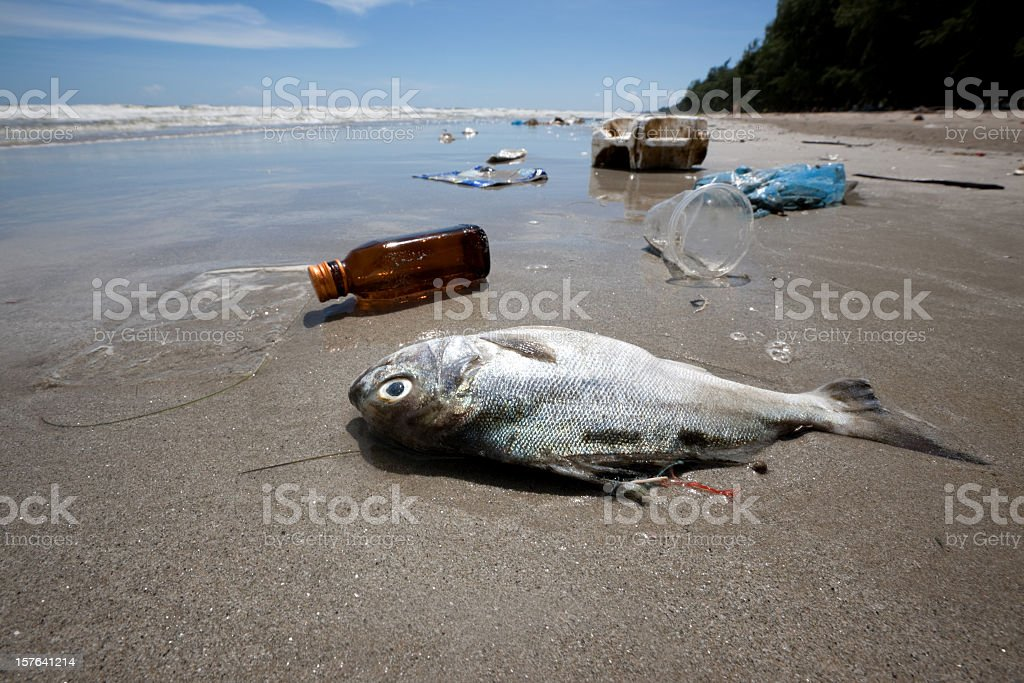 Dead fish on a beach surrounded by washed up garbage. stock photo