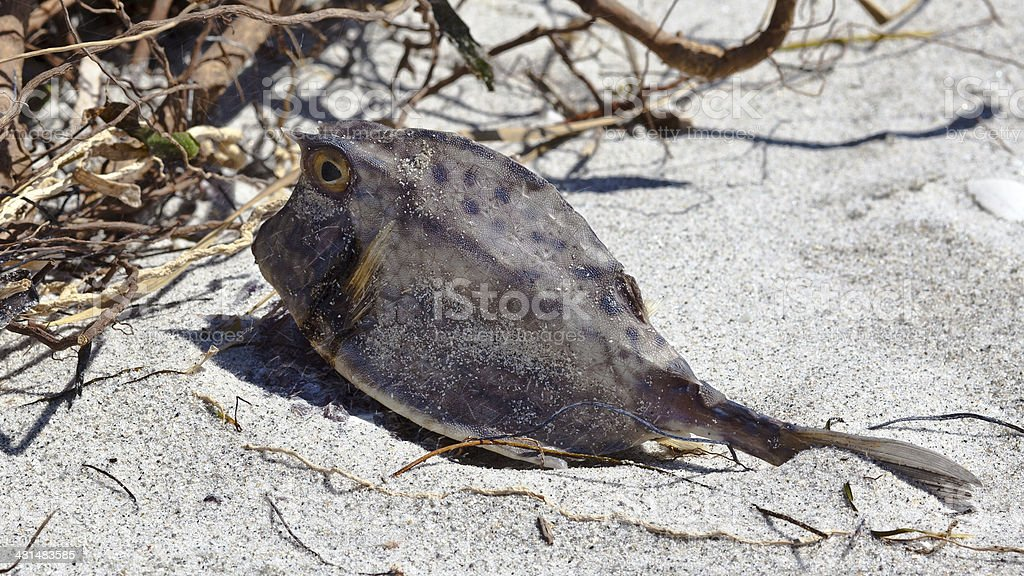 Dead fish on the beach stock photo