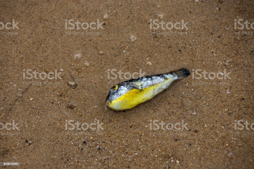 Dead fish on the sand stock photo