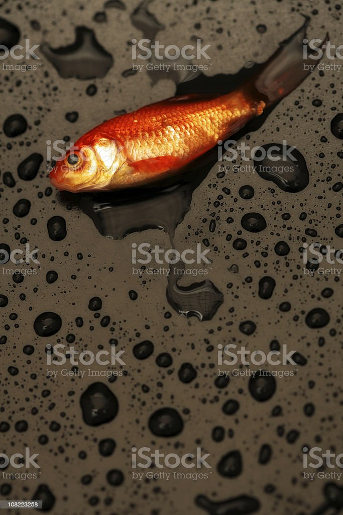 Dead Fish royalty-free stock photo