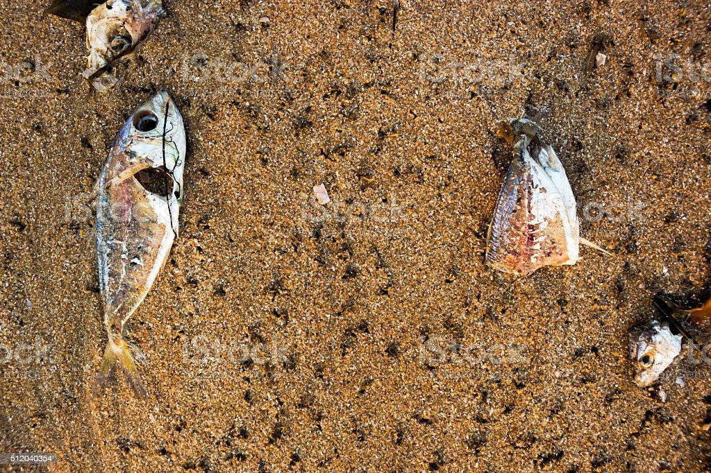 Dead fish. stock photo