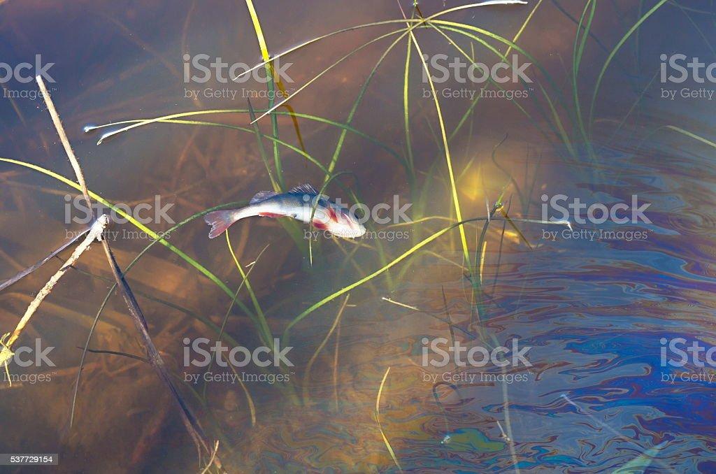dead fish stock photo