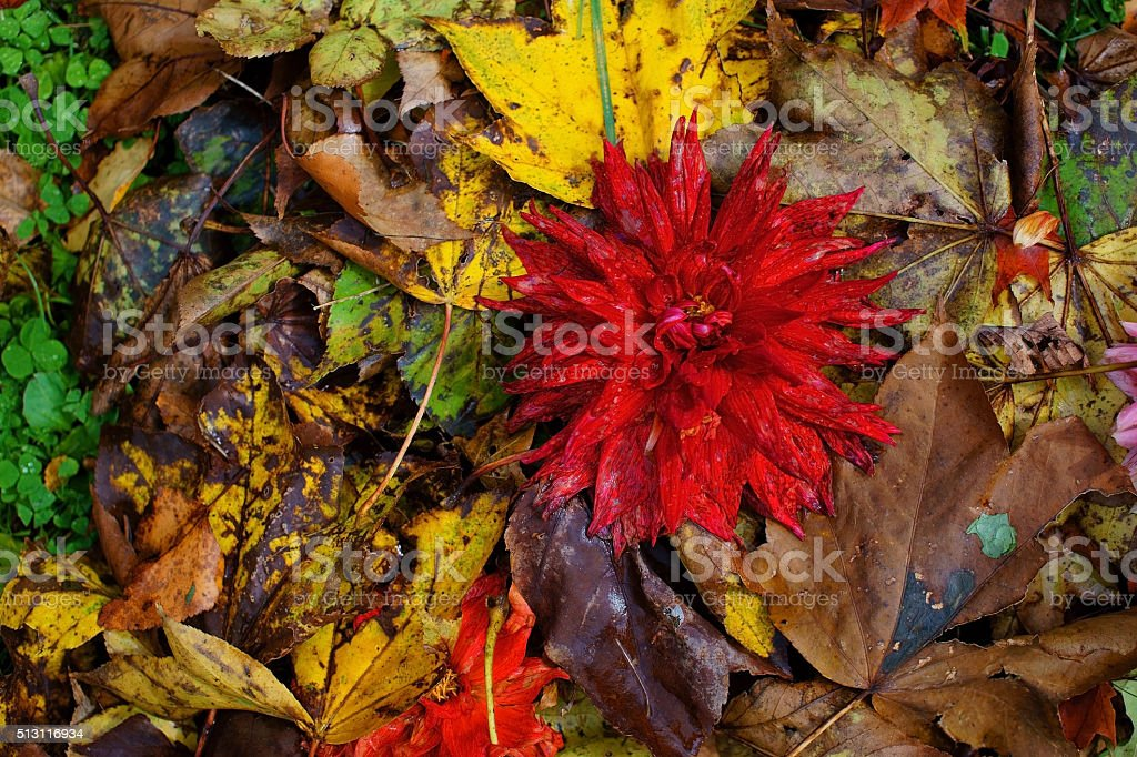 dead flowers and leaves stock photo
