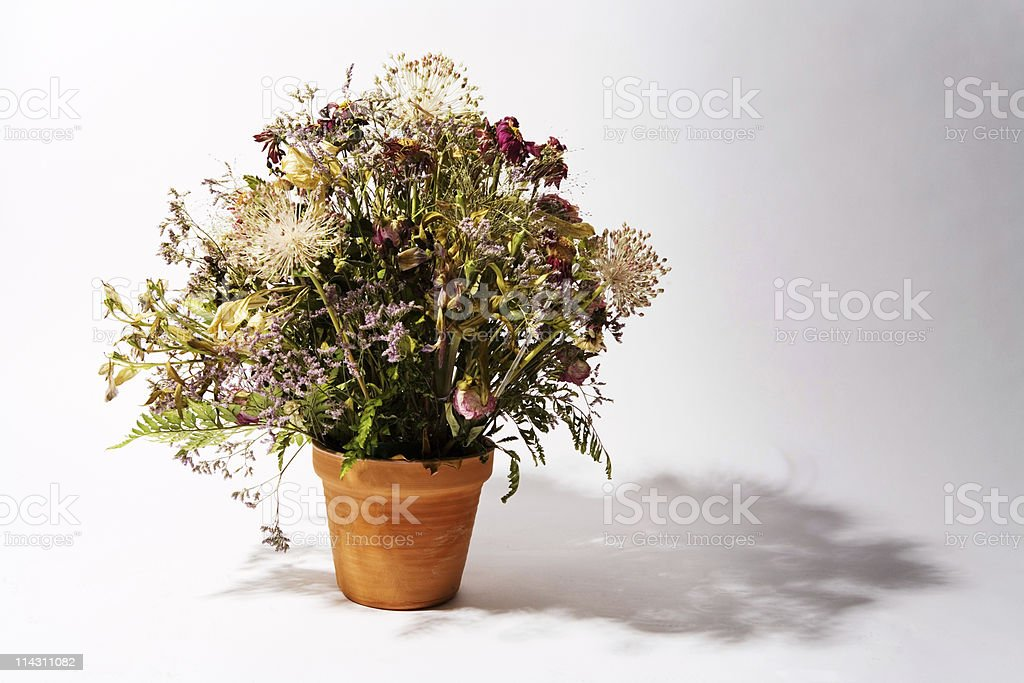 Dead flowers royalty-free stock photo