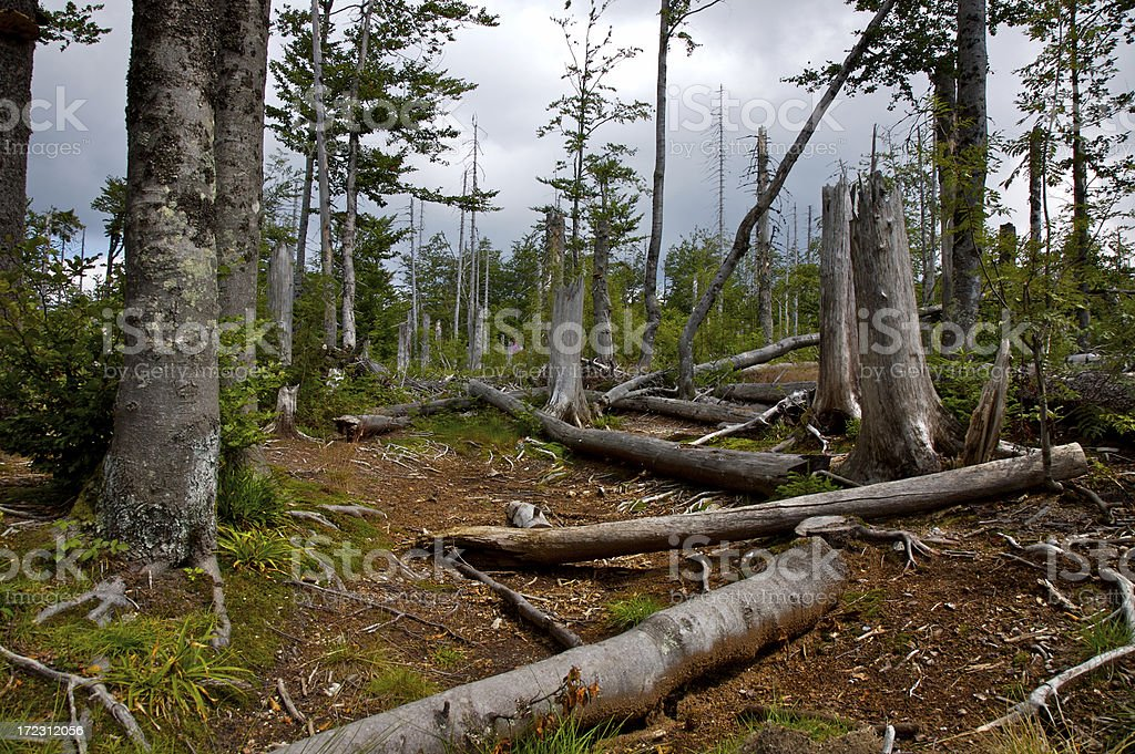 Dead Forest royalty-free stock photo
