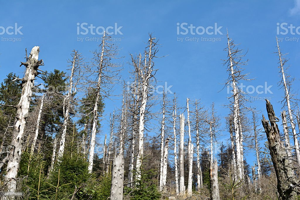 toter Wald stock photo