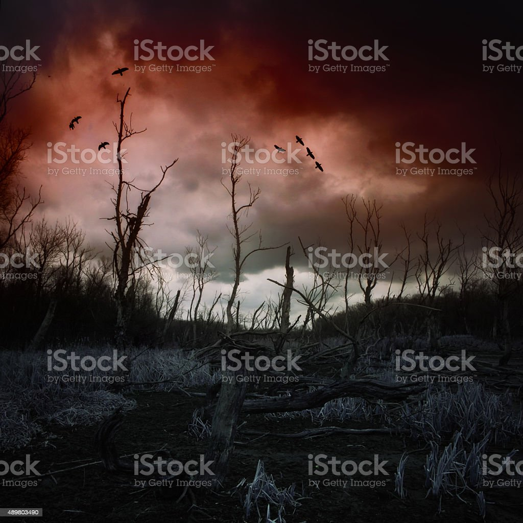 Dead forest with mud and dark clouds stock photo