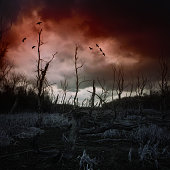 Dead forest with mud and dark clouds
