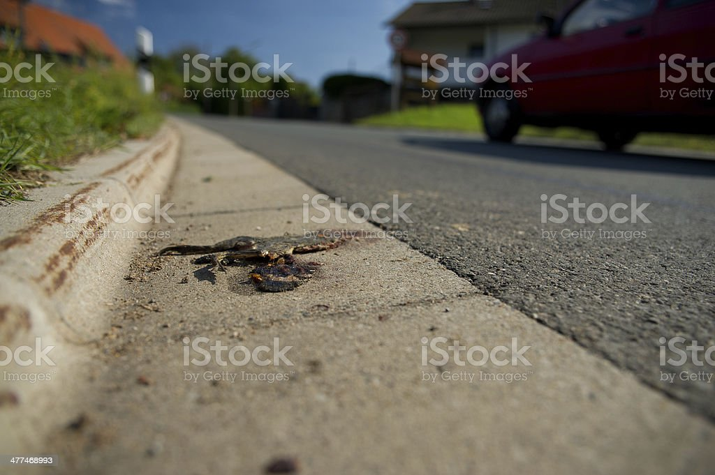 Dead frog royalty-free stock photo