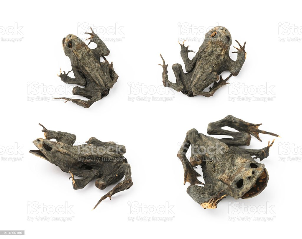 Dead Frog stock photo