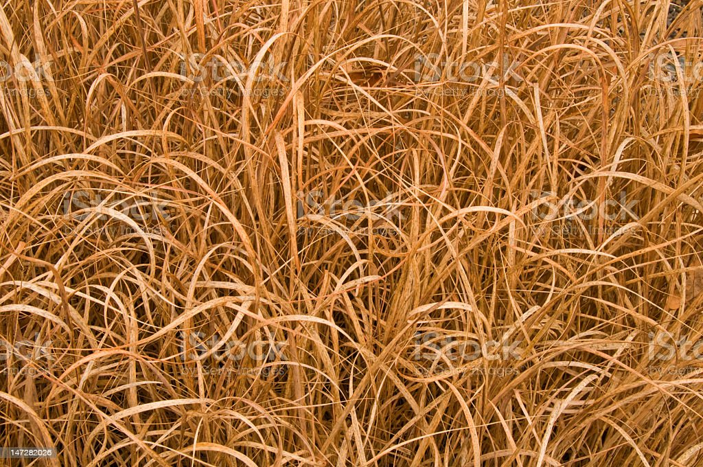 Dead grass background royalty-free stock photo