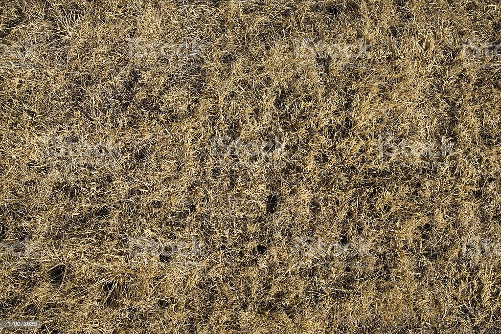 Dead Grass Background stock photo