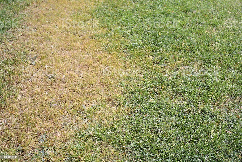 Dead Grass stock photo