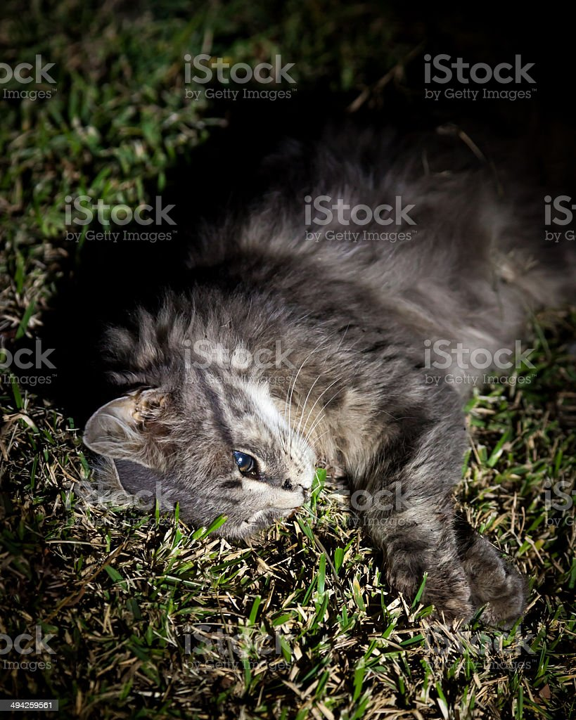 Dead Grey Cat by the Side of Suburban Road stock photo