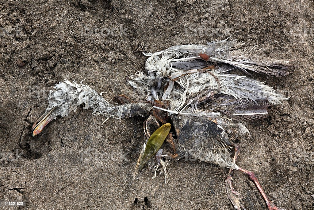 Dead Gull royalty-free stock photo