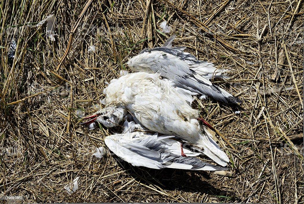 Dead gull stock photo