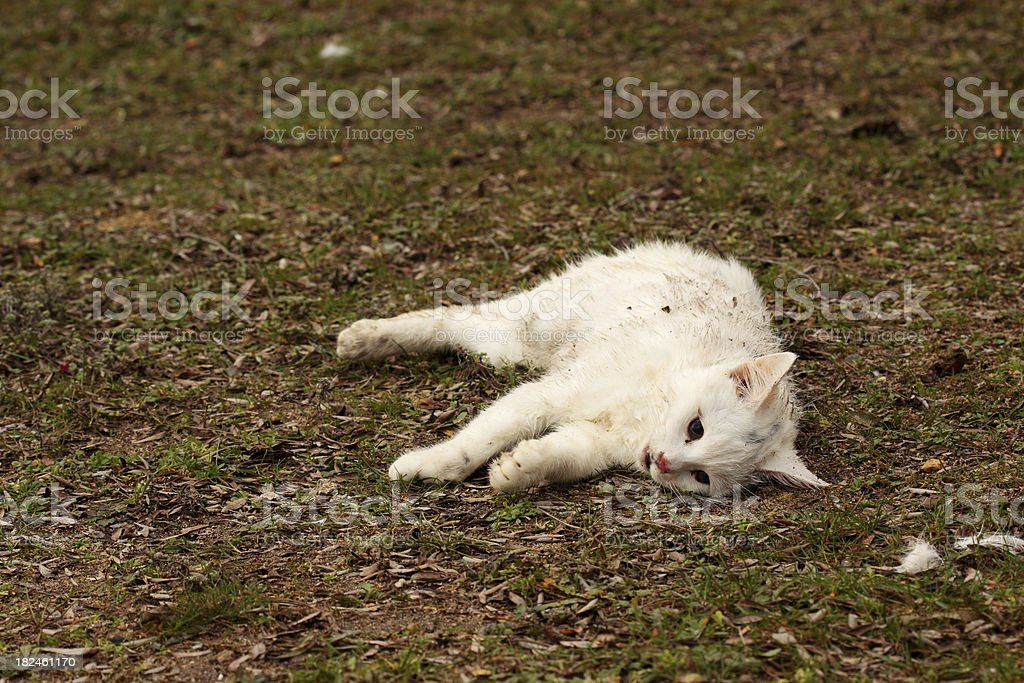 Dead Homeless Cat royalty-free stock photo