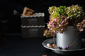 dead hydrangeas in metal pot; dark photo with copy space