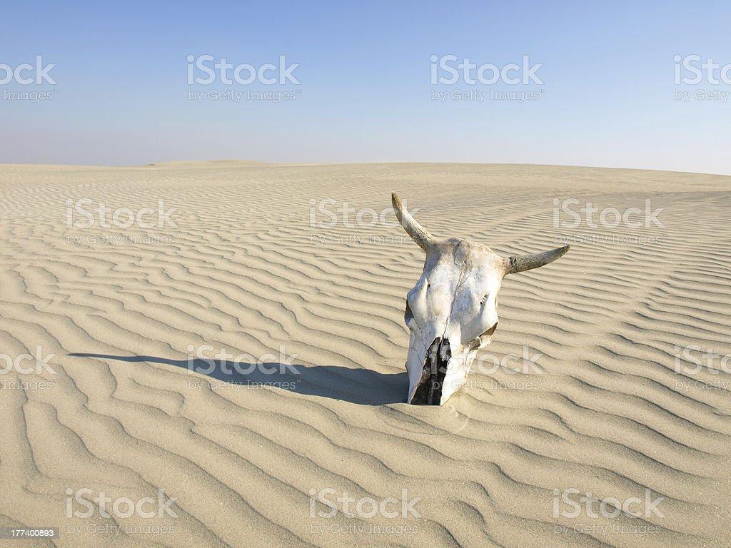 dead in desert stock photo