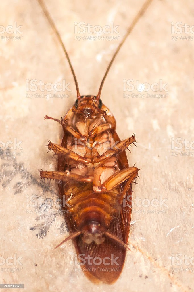 dead insect stock photo