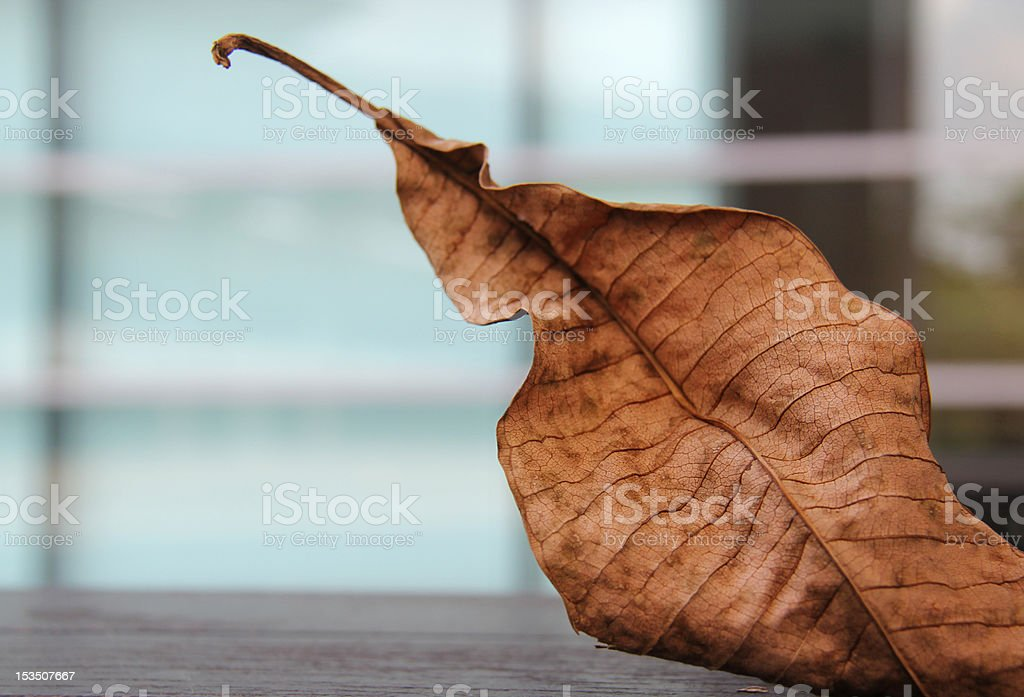 Dead leaf in city stock photo