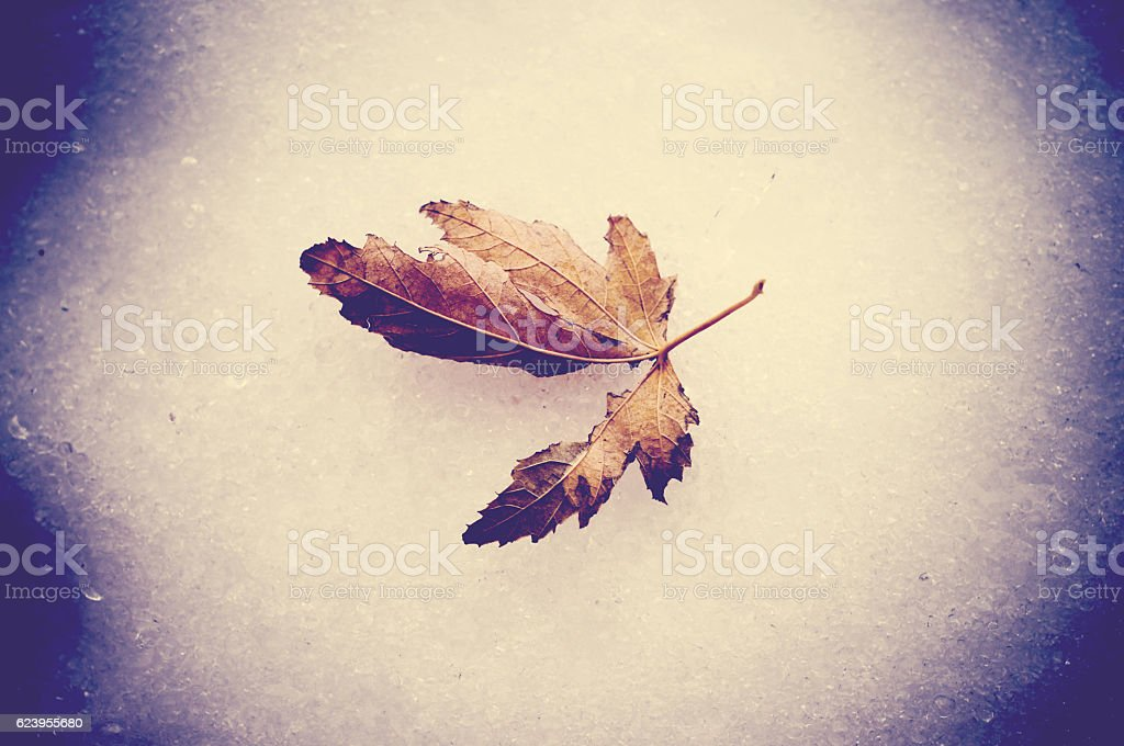 Dead leaf laying on ice stock photo