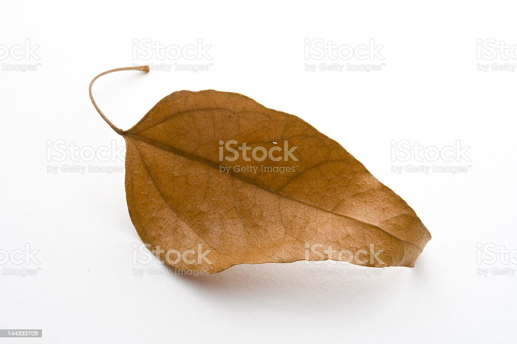 dead leaf royalty-free stock photo