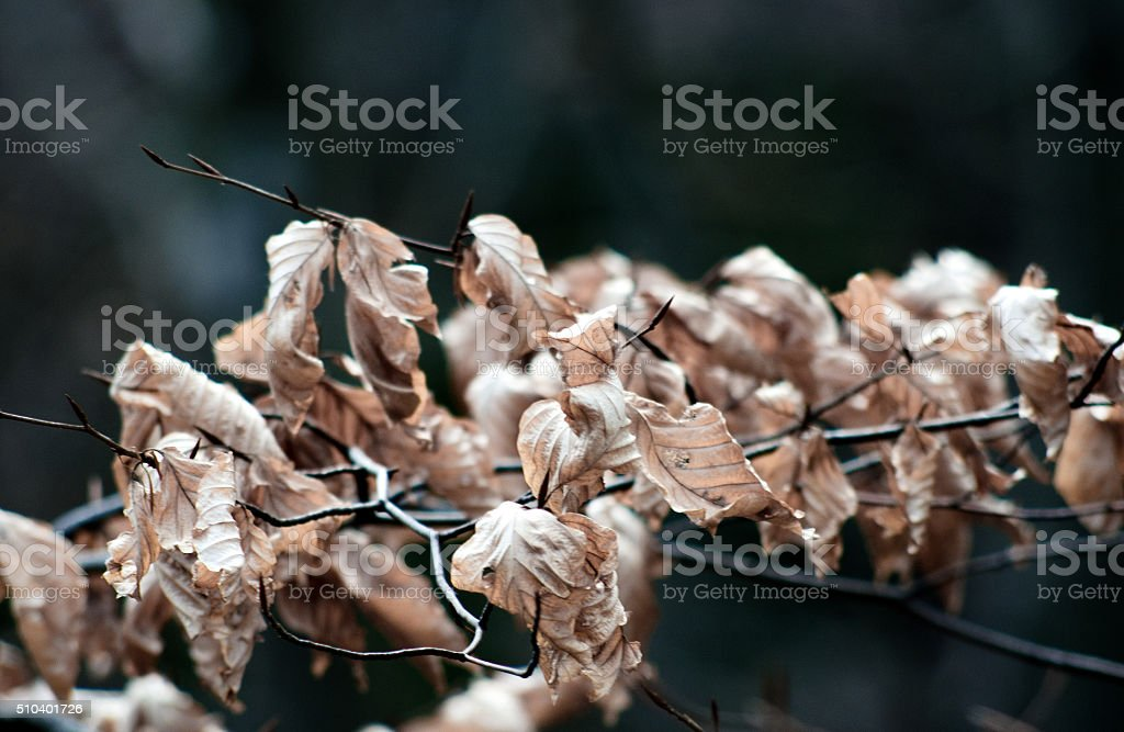 Dead leaves and branch royalty-free stock photo